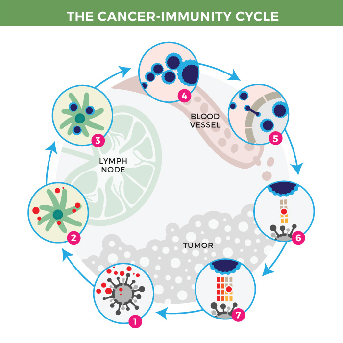The Cancer-immunity cycle