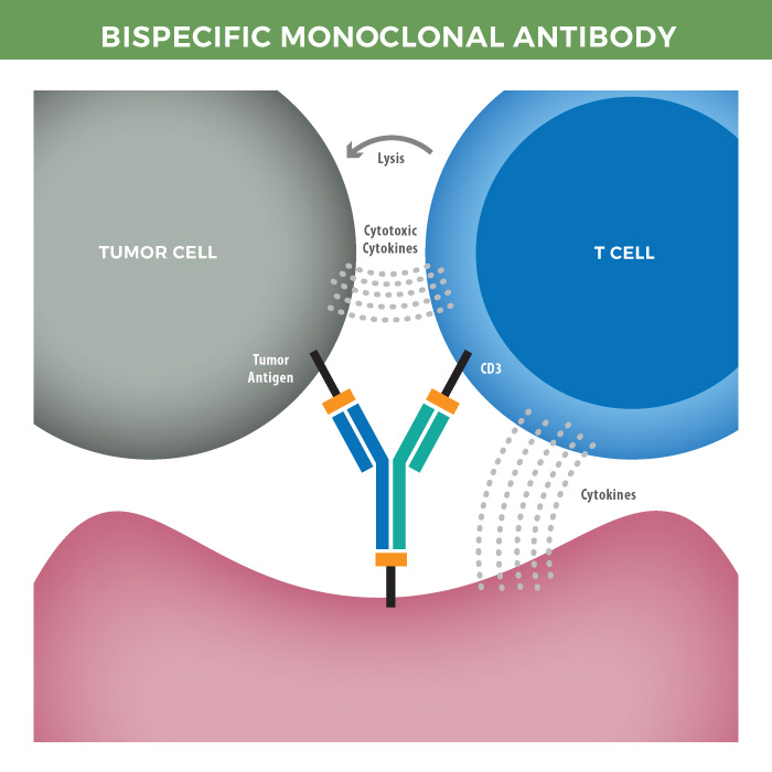 monoclonal antibodies Monoclonal antibodies (mabs) aptamers vs - production: antibody screening and production is laborious and expensive, involving large-scale production of many different colonies in cell cultures.