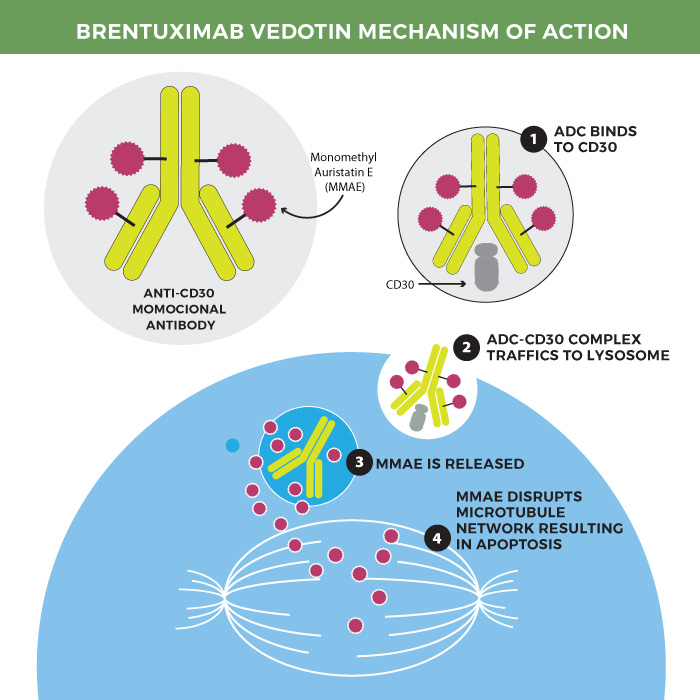 Brentuximab vedotin mechanism of action.