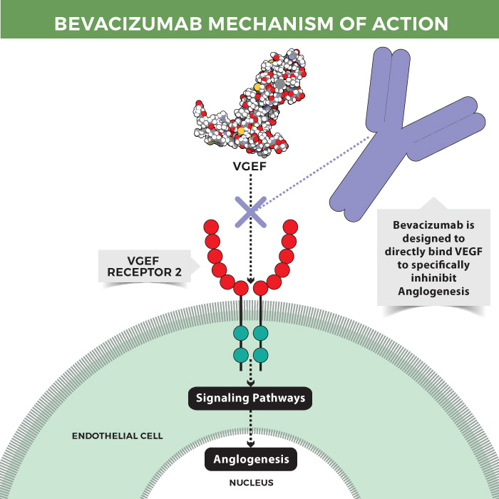 Bevacizumab mechanism of action.